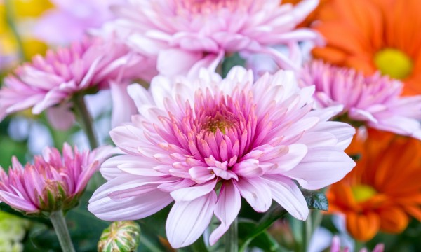 Choose the perfect flowers for holiday celebrations