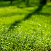 12 pointers on how to reseed or resod a lawn for healthier grass