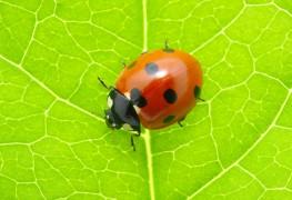 How to make ladybug bowling balls