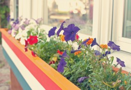 11 ideas for adorning your home with window boxes