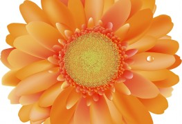 Care-free annuals: calendula