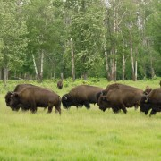 Follow the seasons in eight national and provincial parks near Edmonton