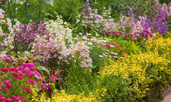 How To Design A Perennial Border That Looks Great Year Round