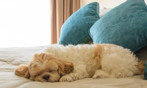 Room for all: Pet-friendly hotels across Canada