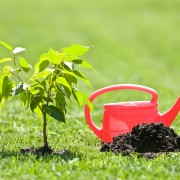 How to plant and prune a tree