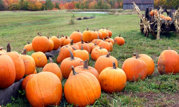 Where to go pumpkin picking in Toronto and the GTA