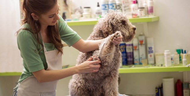 12 important questions to ask when you call a pet groomer
