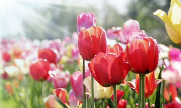 How to choose flowers and plants for an early spring bloom smart tips how to choose flowers and plants for an early spring bloom mightylinksfo