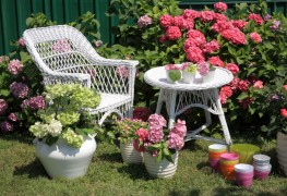 Starting a garden: 10 flower-bed basics