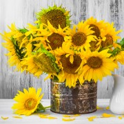 Sunflower arrangements for a vase or bouquets