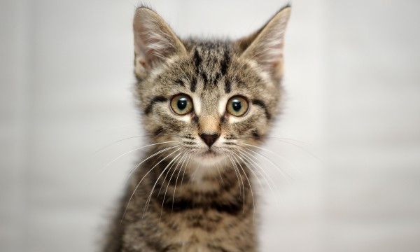 The advantages and disadvantages of neutering cats