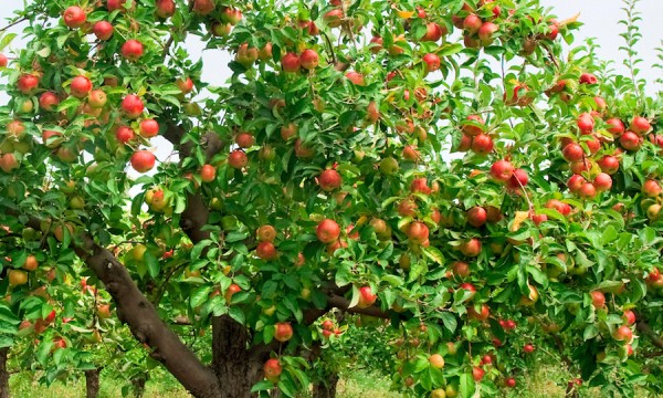 the best time to plant a fruit tree spring or fall?  smart tips, Beautiful flower