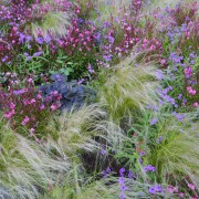 8 pointers for choosing and planting ornamental grasses