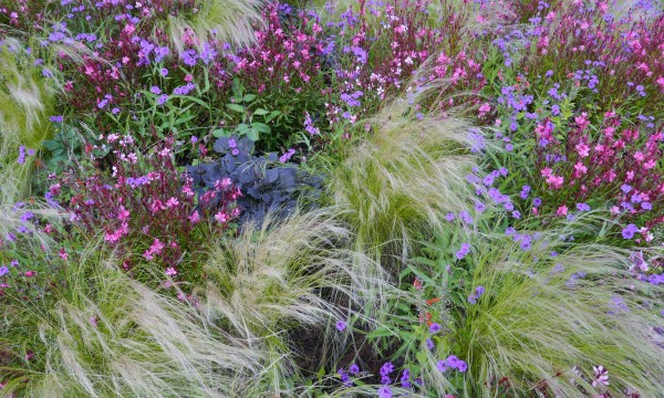 Common Ornamental Grasses 8 pointers for choosing and planting ornamental grasses smart tips 8 pointers for choosing and planting ornamental grasses workwithnaturefo