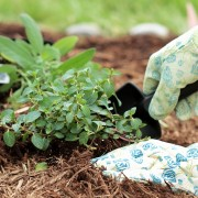6 tricks for using mulch in your garden