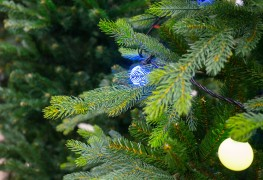 The December debate: Natural or artificial Christmas tree?