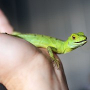 Is owning an exotic animal right for you?