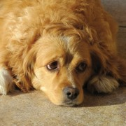 How to deal when your dog has diarrhea
