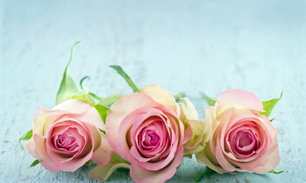 Choosing the right Valentine's Day flowers for your relationship