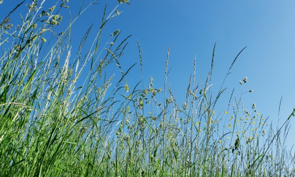 Get to know your grass: 8 varieties that may be growing under your feet