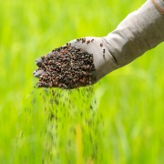What you need to know about fertilizing your garden with phosphorus