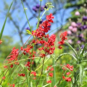 Create a meadow or woodland in your own backyard