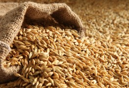 Refined grains and your heart: a primer