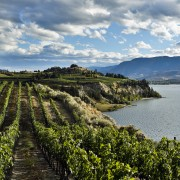 A guide to B.C.'s wineries