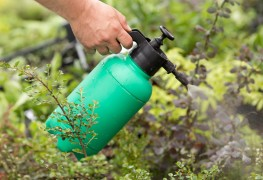 Your guide to using herbicides on unwanted weeds