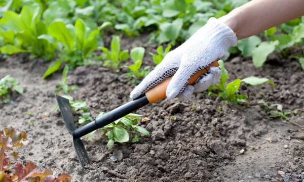 Your guide to hoeing your garden to keep it weed-free | Smart Tips