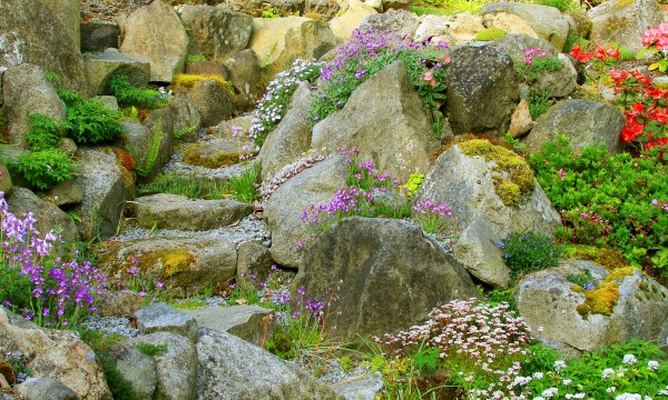 Your guide to choosing rocks and plants for a rock garden – Plants for a Rock Garden