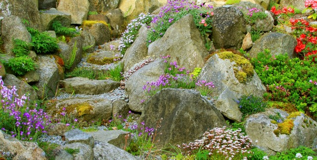 Your guide to choosing rocks and plants for a rock garden