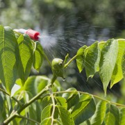 Your guide to using insecticides in the garden