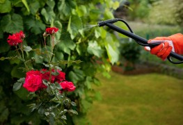 Your guide to using sprayers in the garden