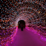 Light up Calgary: 10 places to see Christmas lights this holiday season