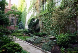 Finding the right plants for dense dry shade
