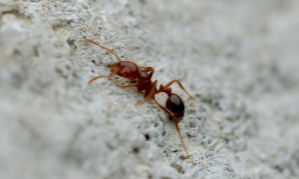 3 tricks to get the best of ants and fleas