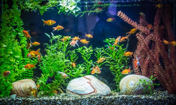 Handy tips for cleaning an aquarium
