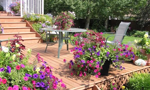 8 inspiring ideas to transform your backyard into an oasis - Plantas para jardin exterior ...