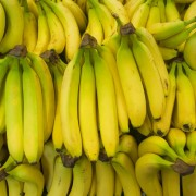 Easy steps on how to grow bananas and blueberries