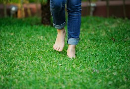 Green envy: hints for creating a more lush, care-free lawn