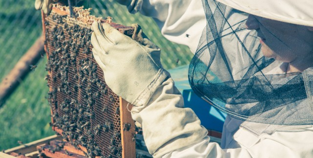 Simple basics for becoming a beekeeper
