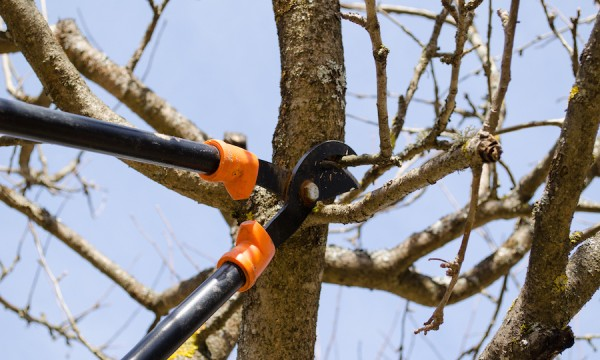 Must-have garden tools to keep your trees in tip-top shape