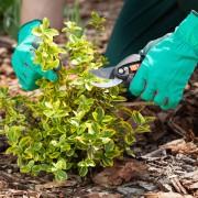 6 essential gardening tools