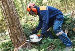 The 6 most frequently asked questions about tree removal