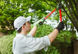 10 reasons to hire a professional arborist to care for your trees