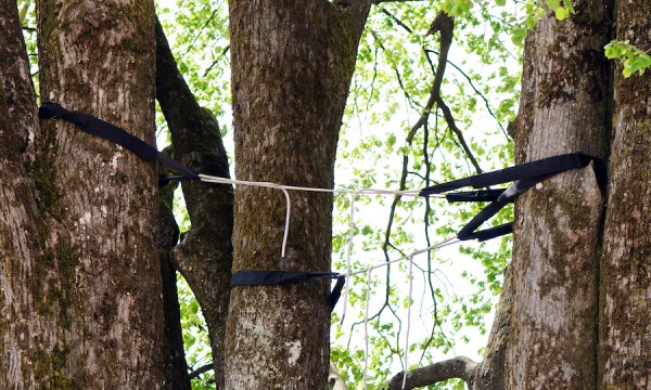 3 ways rigging can help rescue and revive a damaged tree