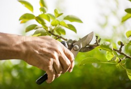 5 top tips and best techniques for properly pruning a tree