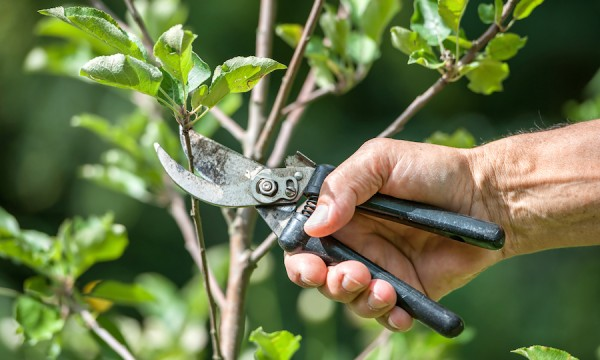 Springtime maintenance tips for healthy trees all summer long