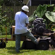 Everything you need to know about tree stump removal